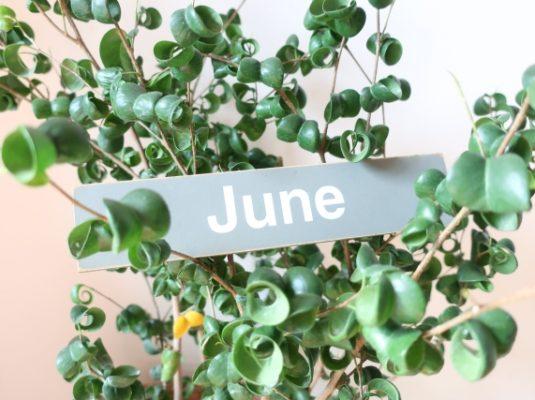 6月お休み